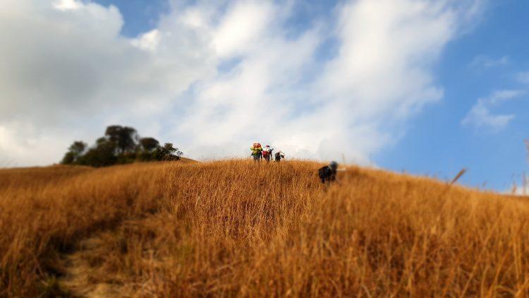 Màu cỏ cháy bao phủ